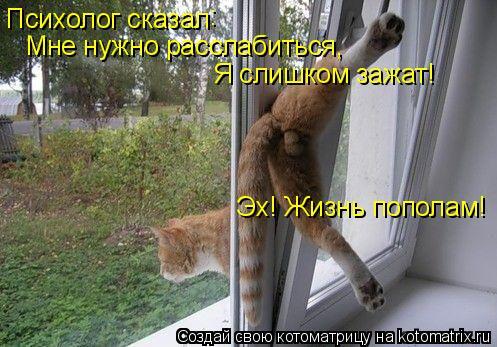 Котоматрица: Психолог сказал : Мне нужно расслабиться, Я слишком зажат! Эх! Жизнь пополам!