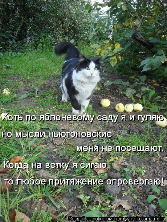 Котоматрица: Хоть по яблоневому саду я и гуляю, но мысли ньютоновские  меня не посещают. Когда на ветку я сигаю, то любое притяжение опровергаю!