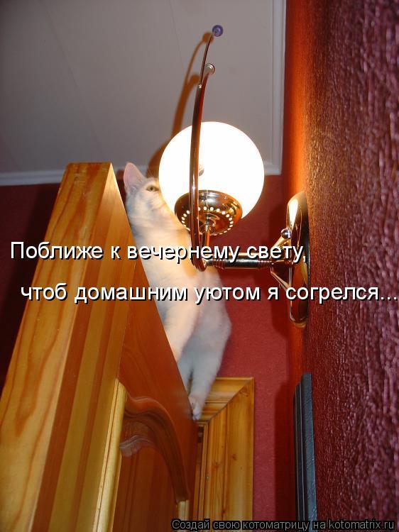 Котоматрица: Поближе к вечернему свету, чтоб домашним уютом я согрелся...