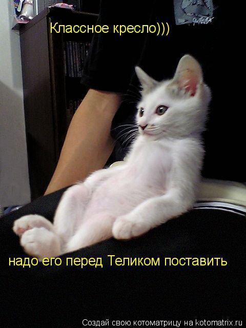 Котоматрица: Классное кресло))) надо его перед Теликом поставить