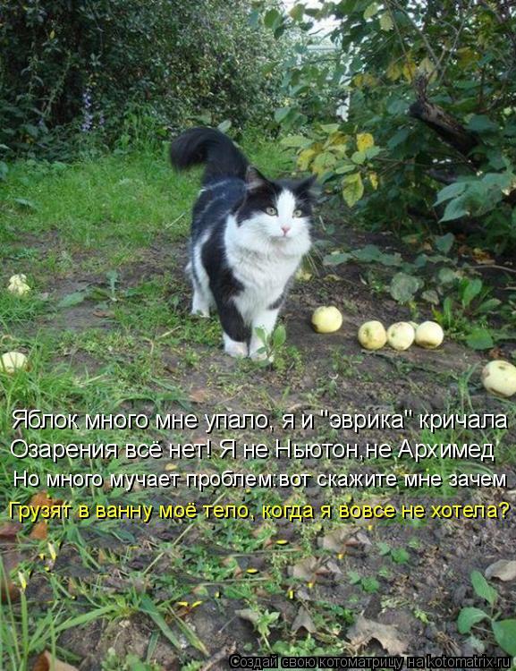 """Котоматрица: Яблок много мне упало, я и """"эврика"""" кричала Озарения всё нет! Я не Ньютон,не Архимед Но много мучает проблем:вот скажите мне зачем Грузят в ва"""
