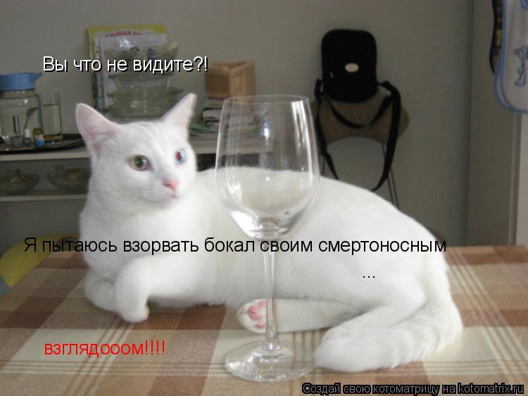 Котоматрица: Вы что не видите?! Я пытаюсь взорвать бокал своим смертоносным ... взглядооом!!!!