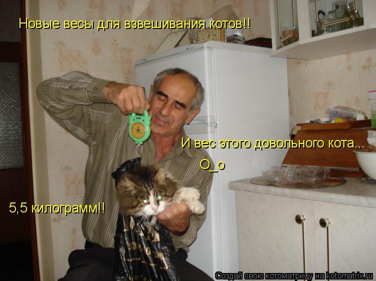 Котоматрица: Новые весы для взвешивания котов!! И вес этого довольного кота... О_о 5,5 килограмм!!