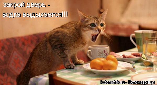Котоматрица: закрой дверь -  водка выдыхается!!!