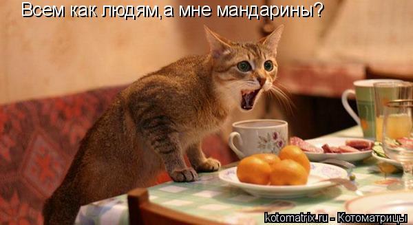 Котоматрица: Всем как людям,а мне мандарины?