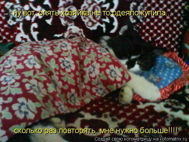 Котоматрица: ну вот, опять хозяйка не то одеяло купила... сколько раз повторять, мне нужно больше!!!!