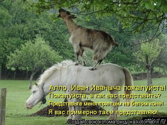 Котоматрица: Алло, Иван Иваныча пожалуйста! Пожалуйста, а как вас представить? Представьте меня принцем на белом коне! Я вас примерно так и представляю!