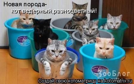 Котоматрица: Новая порода- кот ведерный,разноцветный!