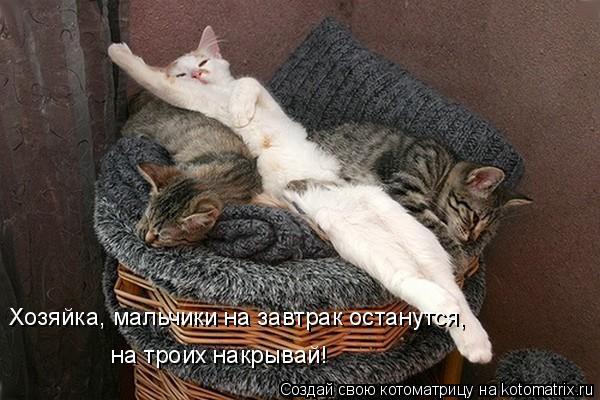 Котоматрица: Хозяйка, мальчики на завтрак останутся, на троих накрывай!