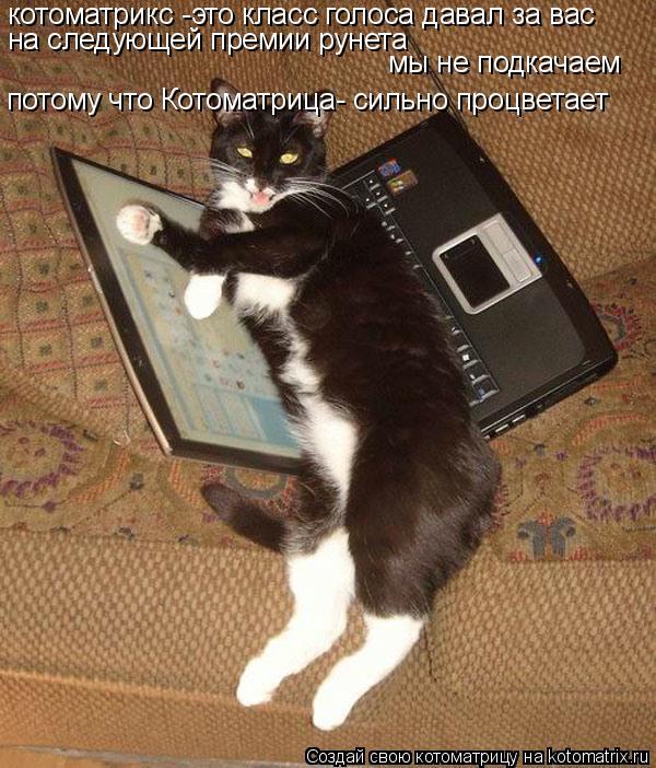 Котоматрица: котоматрикс -это класс голоса давал за вас на следующей премии рунета  мы не подкачаем потому что Котоматрица- сильно процветает