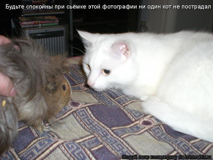 Котоматрица: Будьте спокойны при сьёмке этой фотографии ни один кот не пострадал