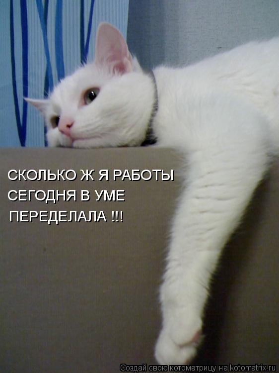 Котоматрица: СКОЛЬКО Ж Я РАБОТЫ СЕГОДНЯ В УМЕ ПЕРЕДЕЛАЛА !!!