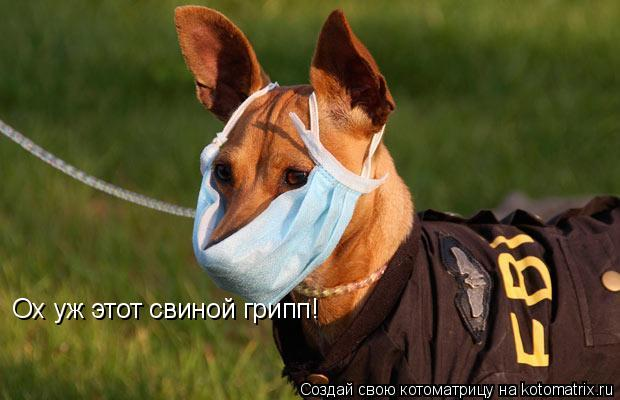 Котоматрица: Ох уж этот свиной грипп!
