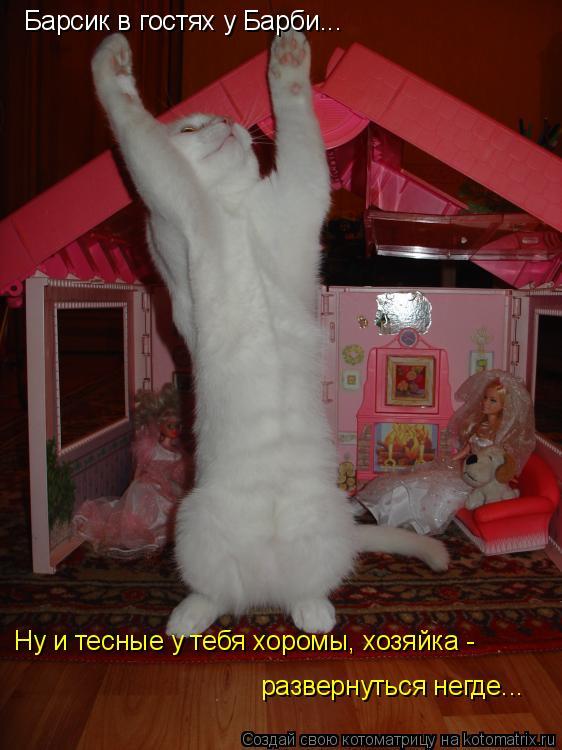 Котоматрица: Барсик в гостях у Барби... Ну и тесные у тебя хоромы, хозяйка -  развернуться негде...
