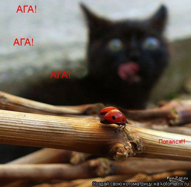 Котоматрица: АГА! АГА! АГА! Попался!!