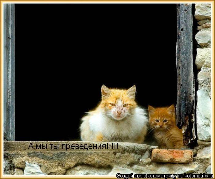 Котоматрица: А мы ты преведения!!!!!