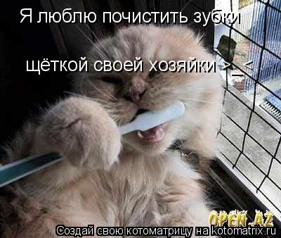 Котоматрица: Я люблю почистить зубки щёткой своей хозяйки >_<