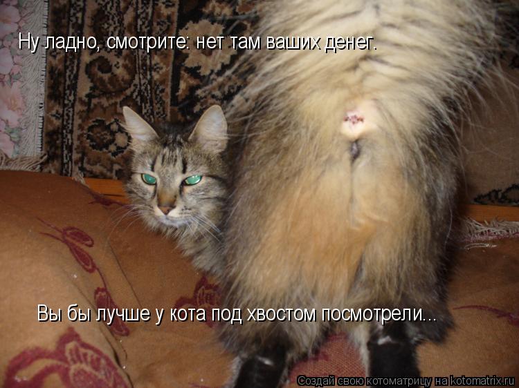 появились слухи, почему кошка подымает хвост и ссыт Совхозе