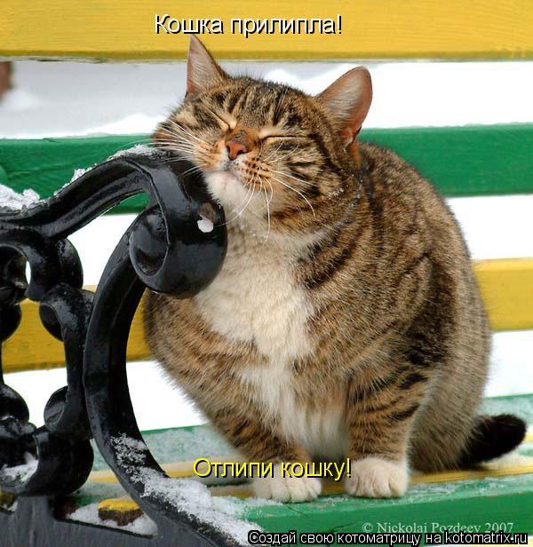 Котоматрица: Кошка прилипла! Отлипи кошку!