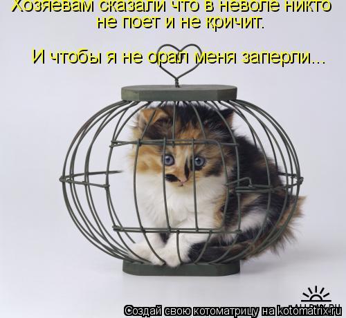 Котоматрица: Хозяевам сказали что в неволе никто  не поет и не кричит. И чтобы я не орал меня заперли...