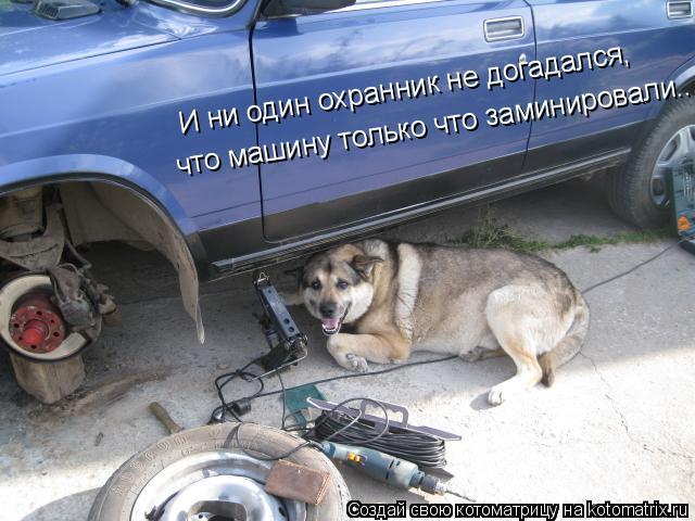 Котоматрица: И ни один охранник не догадался, что машину только что заминировали...