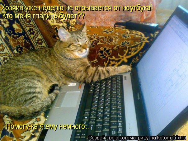 Котоматрица: Хозяин уже неделю не отрывается от ноутбука! Кто меня гладить будет?? Помогу-ка я ему немного...
