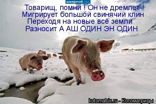 Котоматрица: Мигрирует большой свинячий клин Товарищ, помни ! Он не дремлет ! Переходя на новые всё земли Разносит А АШ ОДИН ЭН ОДИН