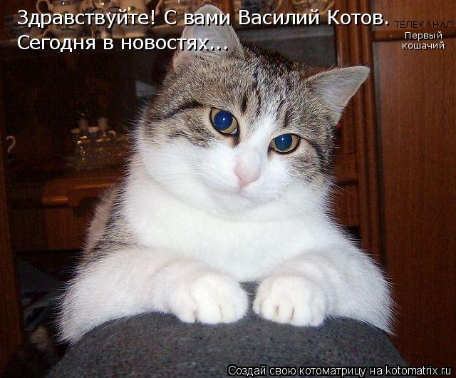 Котоматрица: Здравствуйте! С вами Василий Котов.  Сегодня в новостях... Первый кошачий ТЕЛЕКАНАЛ