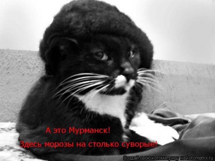 Котоматрица: Здесь морозы на столько суворые! А это Мурманск!
