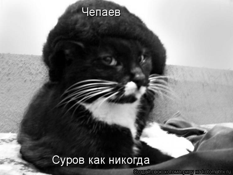 Котоматрица: Чепаев Суров как никогда