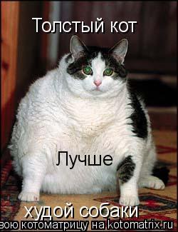 Котоматрица: Толстый кот Лучше худой собаки