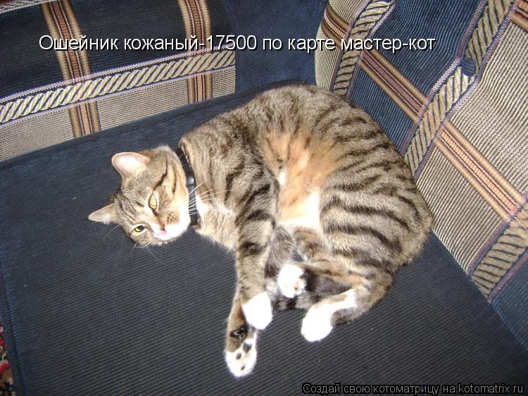 Котоматрица: Ошейник кожаный-17500 по карте мастер-кот