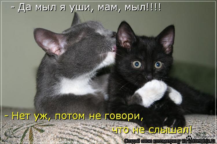 Котоматрица: - Да мыл я уши, мам, мыл!!!! - Нет уж, потом не говори,  что не слышал!