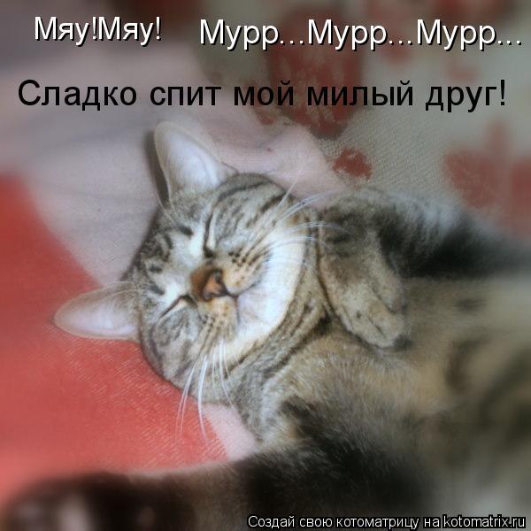 Котоматрица: Мяу!Мяу!  Мурр...Мурр...Мурр... Сладко спит мой милый друг!
