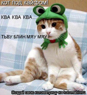 Котоматрица: кот под кайфом! КВА КВА КВА... ТЬВУ БЛИН МЯУ МЯУ !