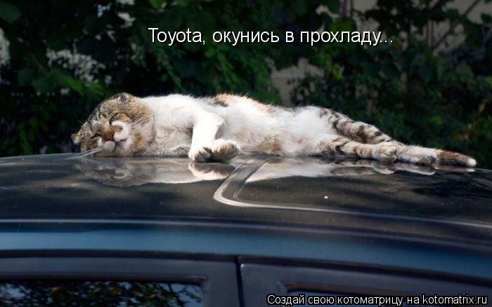 Котоматрица: Toyota, окунись в прохладу...