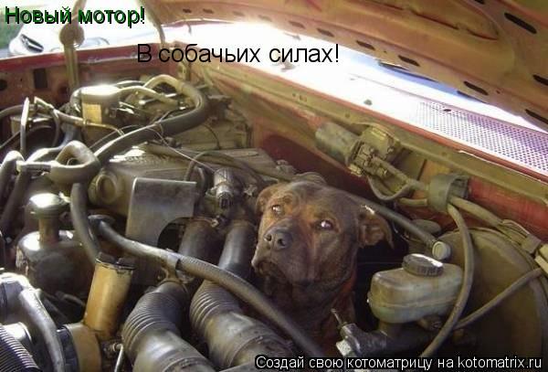 Котоматрица: Новый мотор! В собачьих силах!