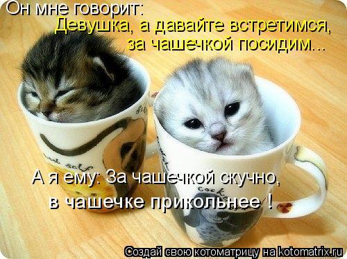 Котоматрица: Он мне говорит: Девушка, а давайте встретимся, за чашечкой посидим... А я ему: За чашечкой скучно, в чашечке прикольнее !