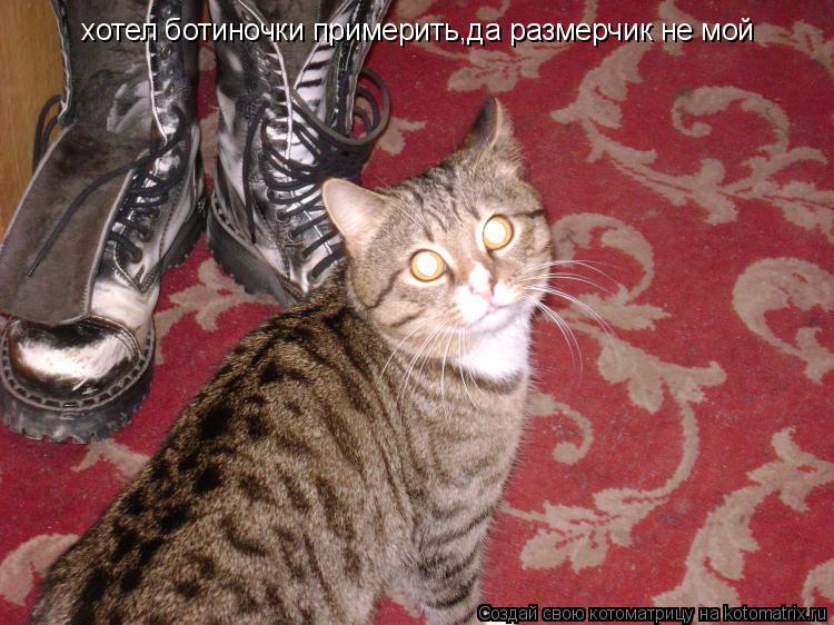 Котоматрица: хотел ботиночки примерить  хотел ботиночки примерить,да размерчик не мой