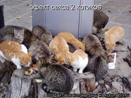 Котоматрица: эфект секса 2 котиков