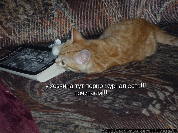 Котоматрица: у хозяйна тут порно журнал есть!!! почитаем!!!