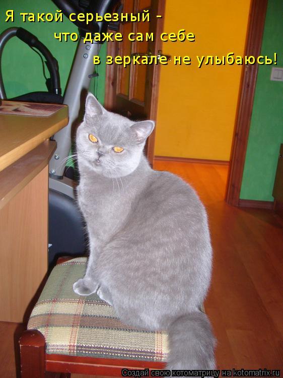 Котоматрица: Я такой серьезный -  что даже сам себе в зеркале не улыбаюсь!