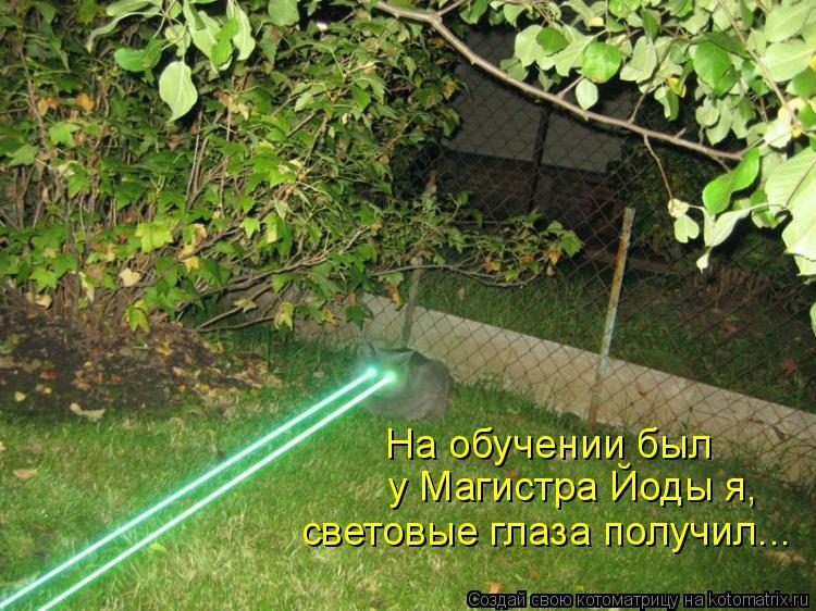 Котоматрица: На обучении был у Магистра Йоды я, световые глаза получил...