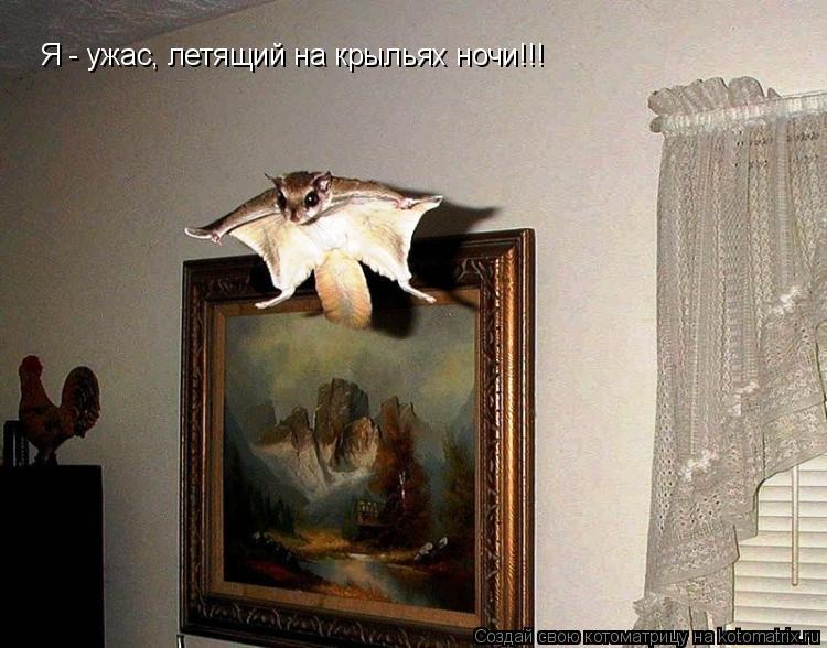 Котоматрица: Я - ужас, летящий на крыльях ночи!!!