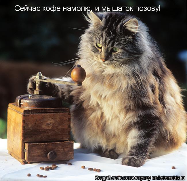 Котоматрица: Сейчас кофе намолю, и мышаток позову!
