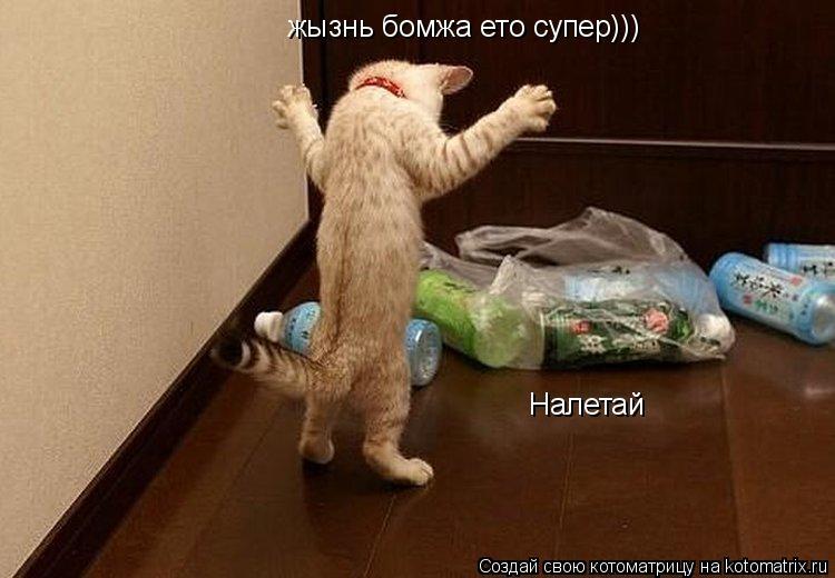 Котоматрица: жызнь бомжа ето супер))) Налетай