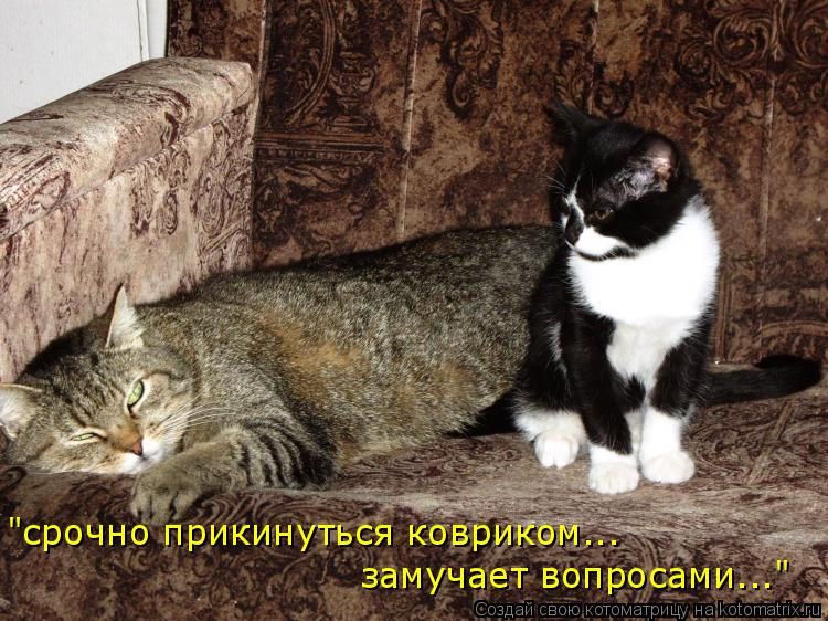 """Котоматрица: """"срочно прикинуться ковриком... замучает вопросами..."""""""