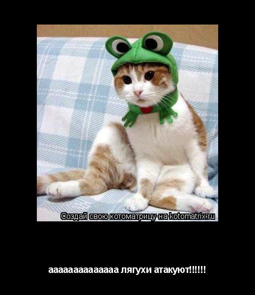 Котоматрица: пятница 13 аааааааааааааа лягухи атакуют!!!!!!