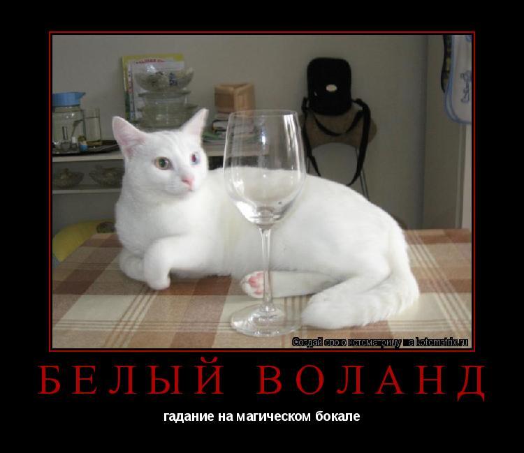Котоматрица: белый Воланд гадание на магическом бокале