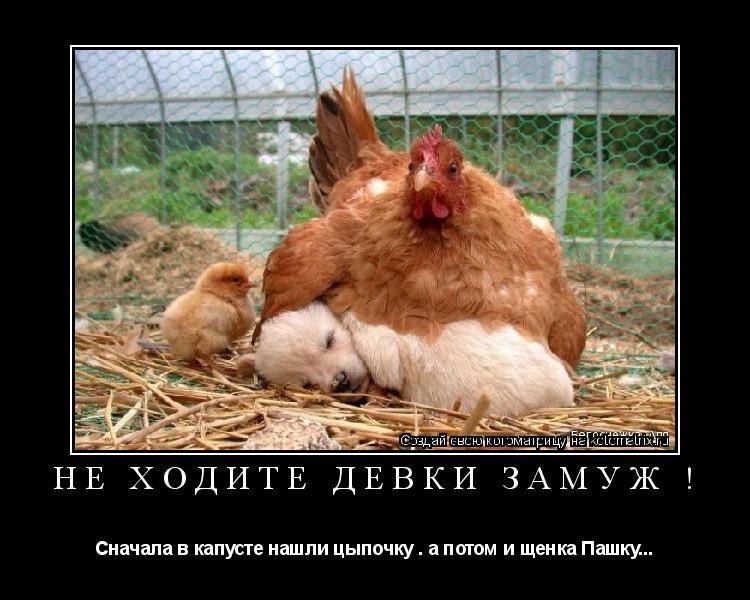 Котоматрица: Не ходите девки замуж ! Сначала в капусте нашли цыпочку . а потом и щенка Пашку...